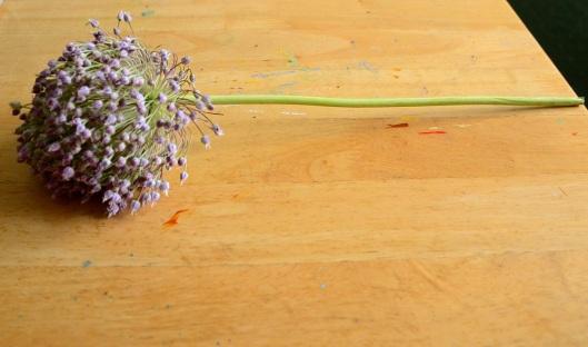 Beautiful garlic flower