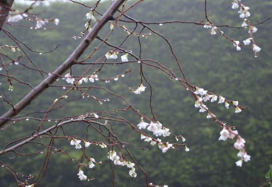 November blossom!